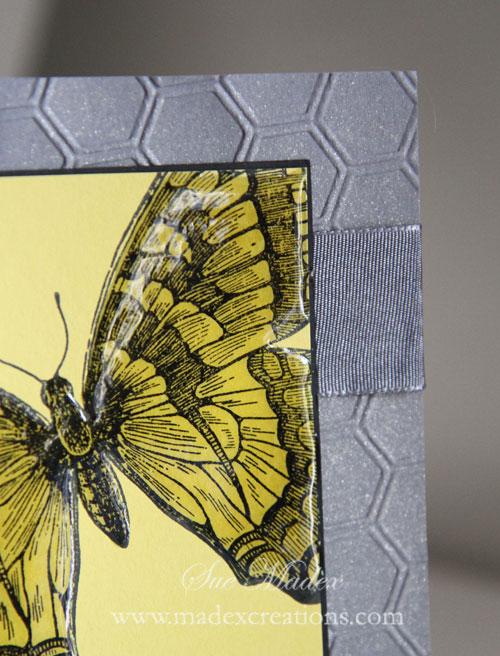 Butterfly-card-3