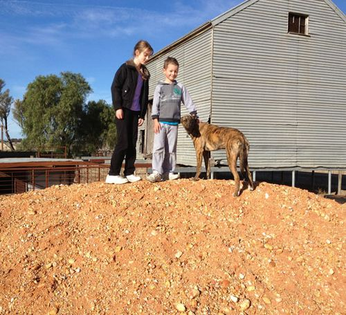 Dirt-pile-and-dog