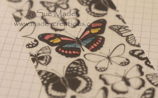 Butterfly-vellum-colour-2