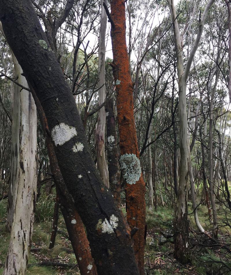 Trees-2